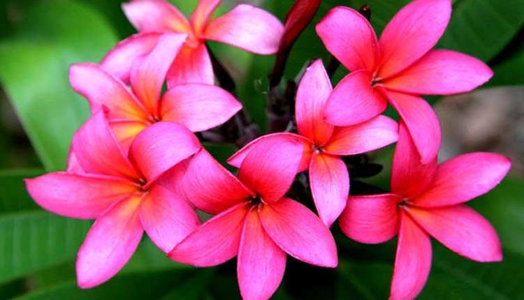 5 Bunga Indah Yang Dapat Mengundang Makhluk Halus Di Rumahmu Kurio