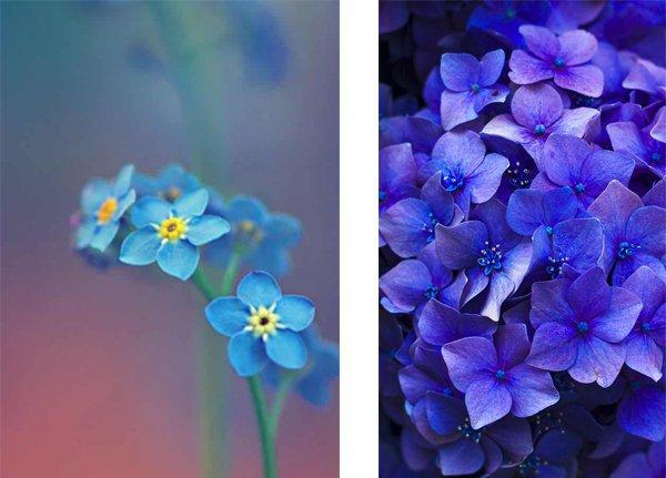 6000+ Wallpaper Bunga Paling Cantik HD Terbaru